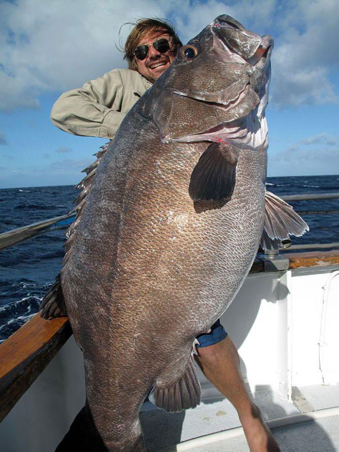 Big fish catch justpost virtually entertaining for Catching big fish