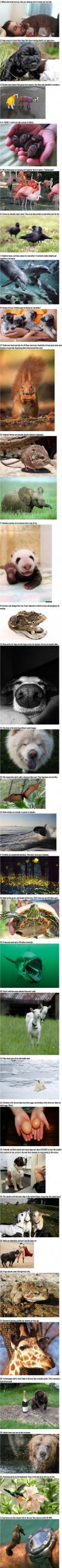 here are 31 random facts about all kinds of animals