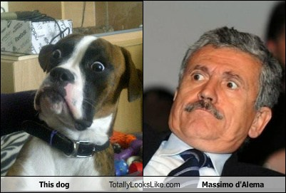 totallylookslike, dog, Massimo d'Alema