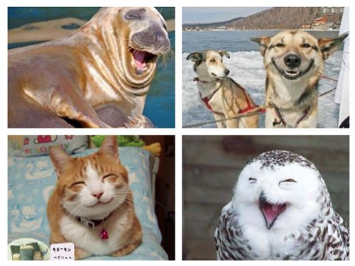 smiling seal dog cat and owl