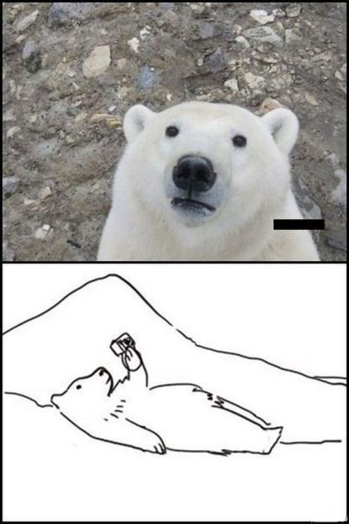 meme, polar bear