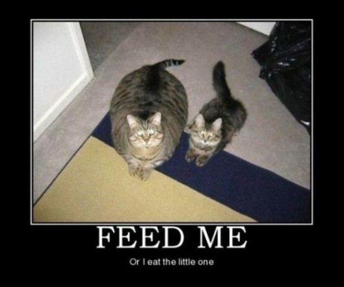 cats, meme