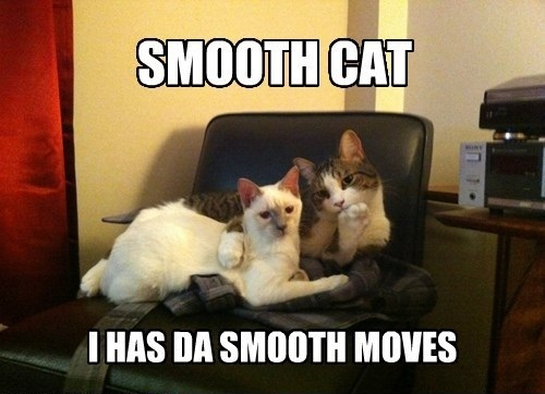 smooth cat has the smooth moves