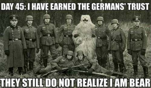 war, meme, German, bear