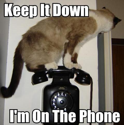 keep it down I'm on the phone, cat, meme