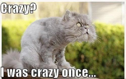 crazy? I was crazy once, cat, meme