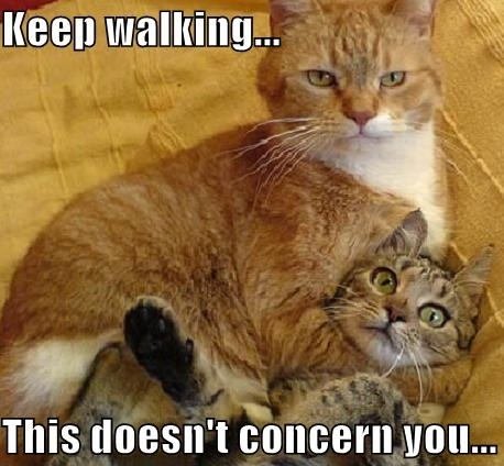 keep walking, this doesn't concern you, meme, cats fighting