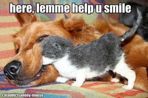 here lemme help you smile, kitten with face in dog's cheek
