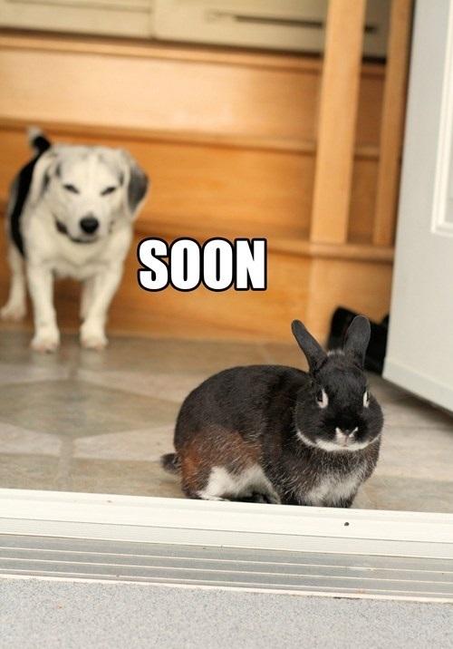 meme, animal, dog