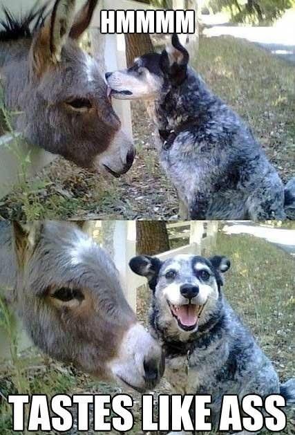 hmmm tastes like ass, dog licks donkey, meme, wordplay