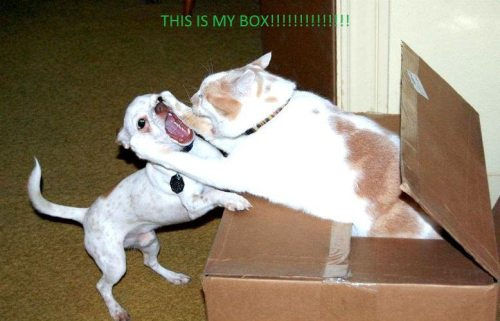 this is my box, cat attacking dog out of box