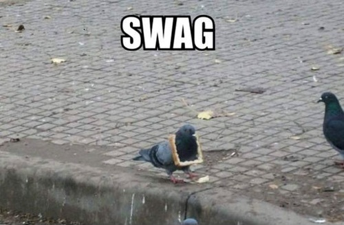 swag, pigeon wearing bread crust necklace