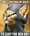 cat, animal, meme