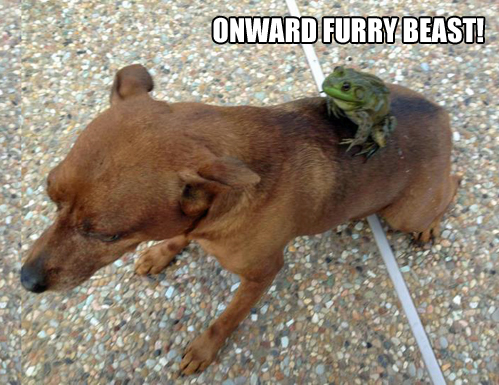 onward furry beast, dog, frog, ride, wtf