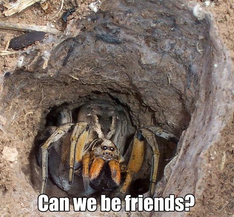 can we be friends, spider, meme, nope