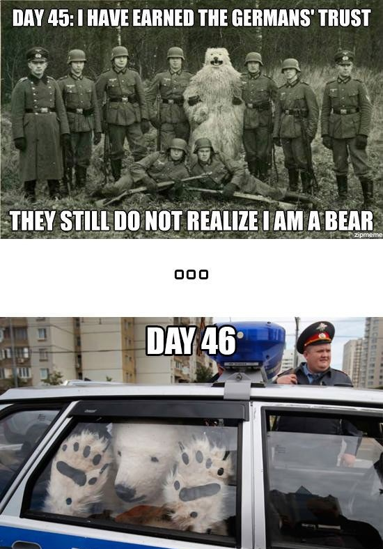 day 45 I have earned the german's trusts, they still do not realize I am a bear, day 46