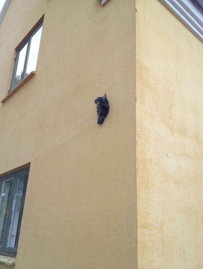cat, wtf