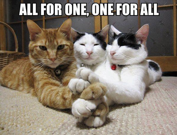 all for one, one for all, cats with paws stacked