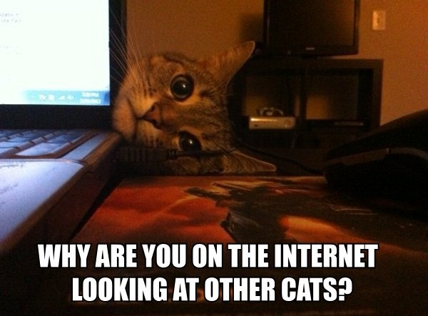 why are you on the internet looking at other cats?, meme