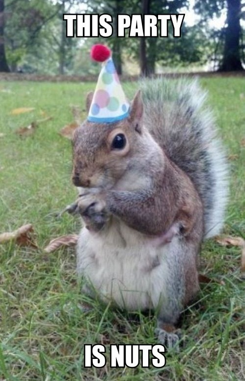 this party is nuts, squirrel wearing party hat, meme