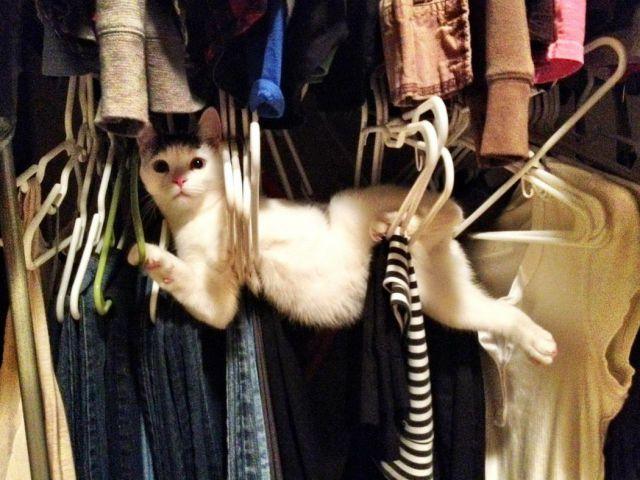 cat, fail, win, hangers, closet