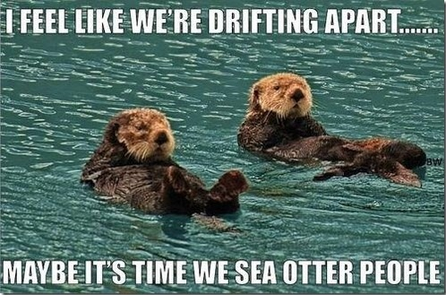 i feel like we're drifting apart, maybe it's time we sea otter people
