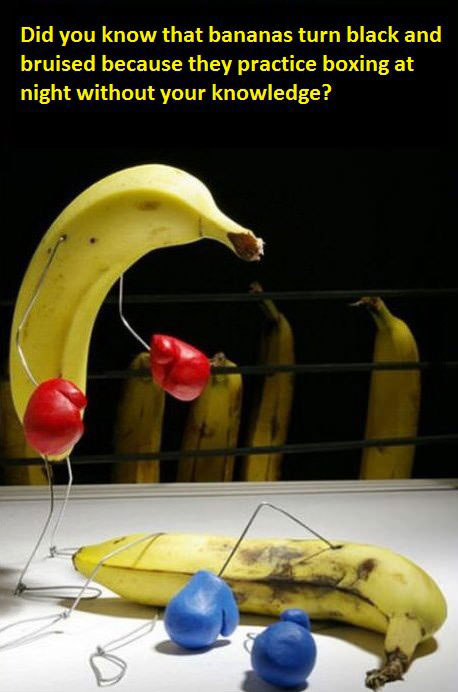 did you know that bananas turn black and bruised because they practice boxing night without your knowledge
