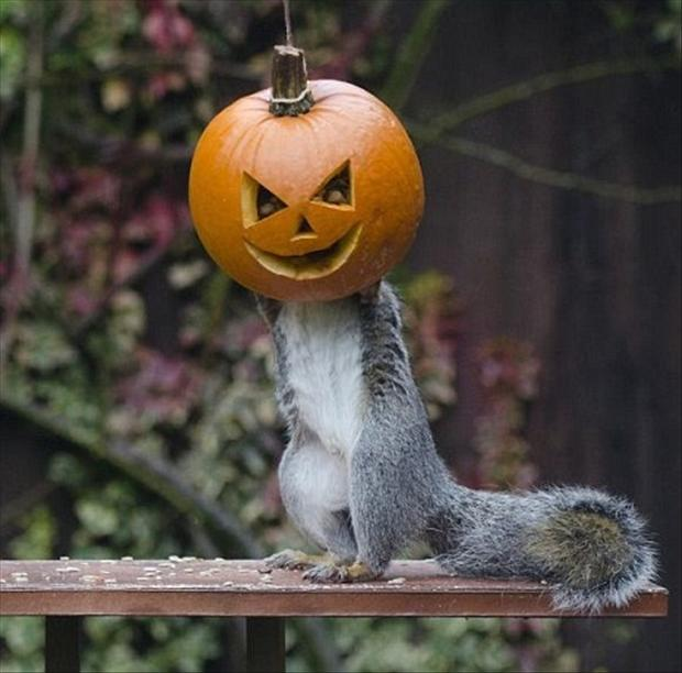 squirrel, pumpkin