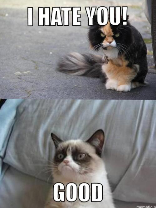 I hate you, good, grumpy cat, meme