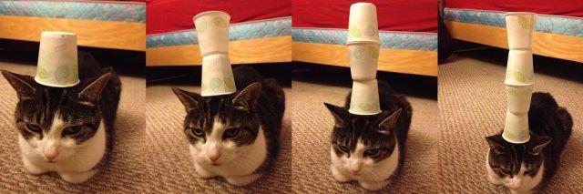 cat, stability, fun