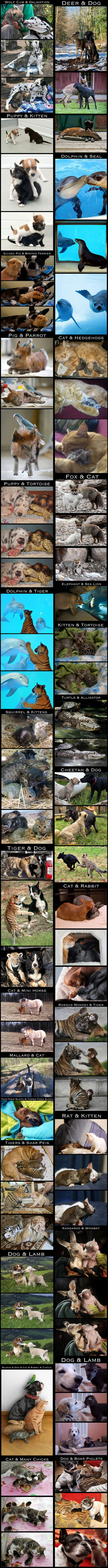 animal, friend, friendship, cat, dog, seal, dolphin, wolf, otter, turtle, fox, long
