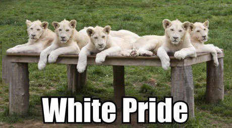 white pride, lion, word play