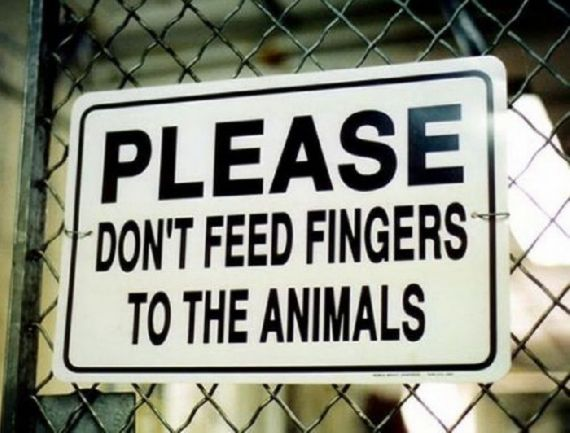 sign, feed, animals, finger