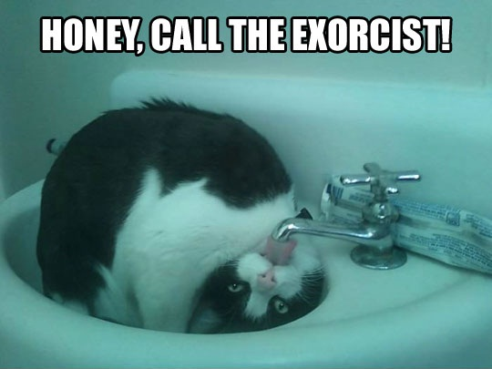 honey call the exorcist, cat drinking water from tap upside down, wtf