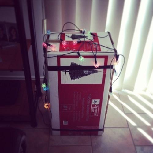 tree, box, christmas, lights, lazy