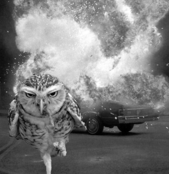owl, action, explosion
