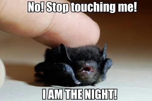 no stop touching me, I am the night, tiny bat