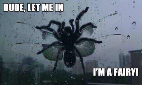 dude let me in I'm a fairy, spider with wings, god can't save you now, meme