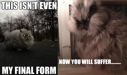 cat, evil, meme, final form
