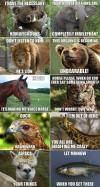 animals, meme, pun, wordplay