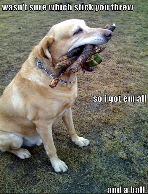 dog, fetch, fail, win, lol, meme