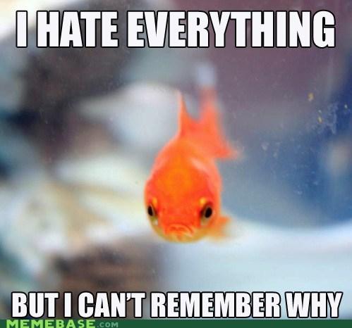 meme, fish, sad, grumpy