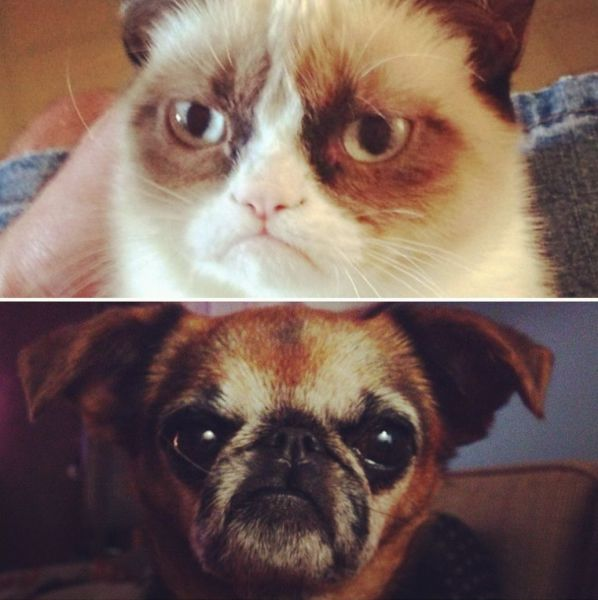 cat, dog, meme