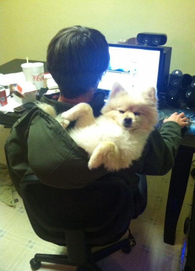 dog, wtf