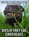 can eat a dead bird, poop, and raw meat, dies if they eat chocolate