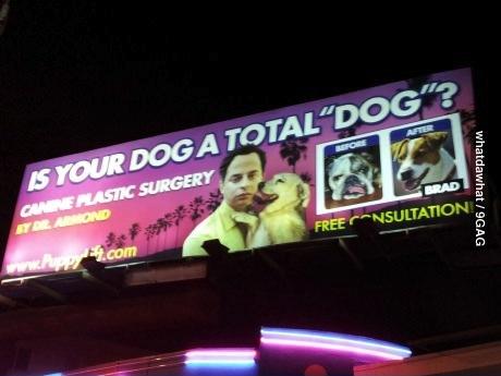 dog, billboard, fail, plastic surgery