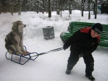 dog, kid, sled, 9gag
