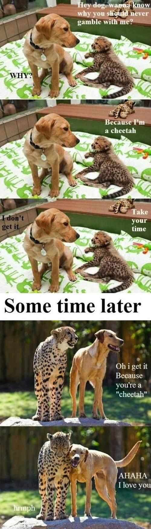 dog, cheetah, joke, lol, pun