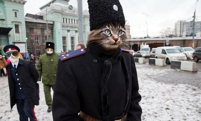cat, russia