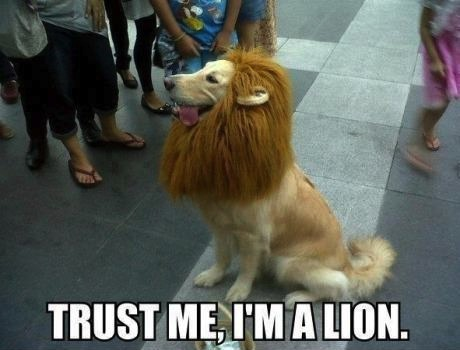 dog, lion, pun, meme